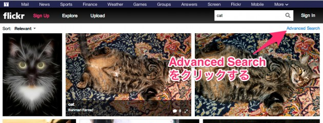 Flickr_Search__cat-5